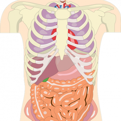 Personer med IBS reagerar starkare på bakterier